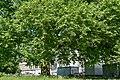 Naturdenkmal im Mitte.jpg
