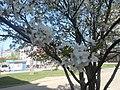 Nature in Smolensk - 27.jpg