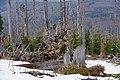 Naturkunstwerk im Nationalpark Bayerischer Wald.jpg
