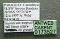 Neivamyrmex orthonotus casent0173527 label 1.jpg