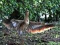 Nesting Time (18452280503).jpg
