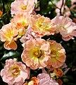 New York Botanical Garden (8076040224).jpg