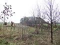 New plantation - geograph.org.uk - 308457.jpg