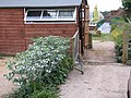 Nursery (14487468494).jpg