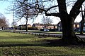 Oak Tree - Longmoor Rd - geograph.org.uk - 642599.jpg