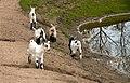 Oaklawn Farm Zoo, May 16 2009 (3538902123).jpg