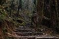 On the trekking trail to Ghorepani - panoramio (3).jpg