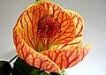 Orange plant 1.jpg