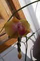 Orchid from Beijing 2.jpg