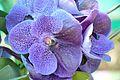Orchidaceae - Alipore - Kolkata 2013-02-10 4744.JPG