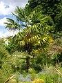 Orléans - jardin des plantes (14).jpg