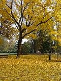 Osijek, Park kralja Petra Krešimira IV.jpg