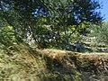 Otok Korčula04556.JPG