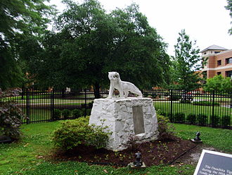 Ouachita Baptist University - Ouachita's iconic Tiger statue has stood in silent vigil over the campus since 1935