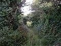 Overgrown lane from Bosence Road to Wheal Gilbert - geograph.org.uk - 221523.jpg