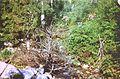 POL Waksmundzki Creek Tatra.jpg