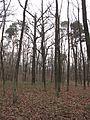 PP Černý orel, les III.jpg