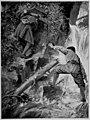 P 087--Revenge--threw aside bushes, brambles and logs.jpg