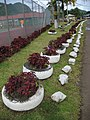 Pago Pago - home of the world's largest collection of white-painted tyres plus purple plants - panoramio.jpg