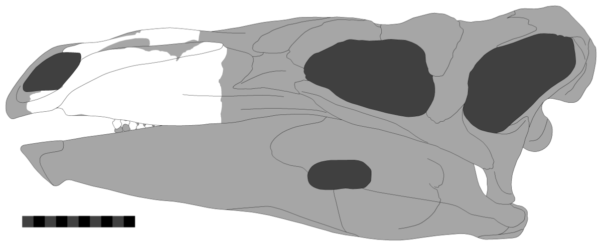 paranthodon wikipedia