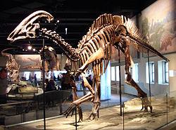 Parasaurolophus cyrtocristatus.jpg