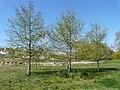 Parc de La Lironde (2396794745).jpg