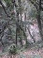 Parc de Vallvidrera 174-7455 IMG.JPG