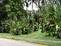 Parque del Este 2012 034.JPG
