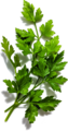Parsley (49652566678).png