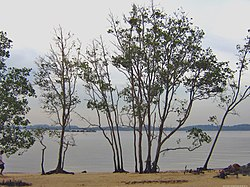 Pasir Ris - Wikipedia, the free encyclopedia