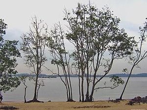 Pasir Ris - Pasir Ris Beach
