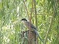 Peace Harmony Nature 28.JPG