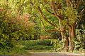 Peisaj in Arboretum Simeria.jpg