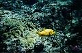 Peixinho - panoramio.jpg