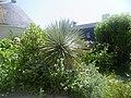 Penn lann domaine de roche vilaine - panoramio (5).jpg