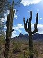 Picacho Peak, AZ 2013 - panoramio (1).jpg