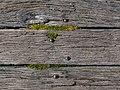 Pier floor - detail, Akaroa, Canterbury, New Zealand 02.jpg