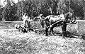 PikiWiki Israel 550 Kibutz Gan-Shmuel ks6- 153 גן-שמואל-הוצאת תפוחי אדמה 1931.jpg