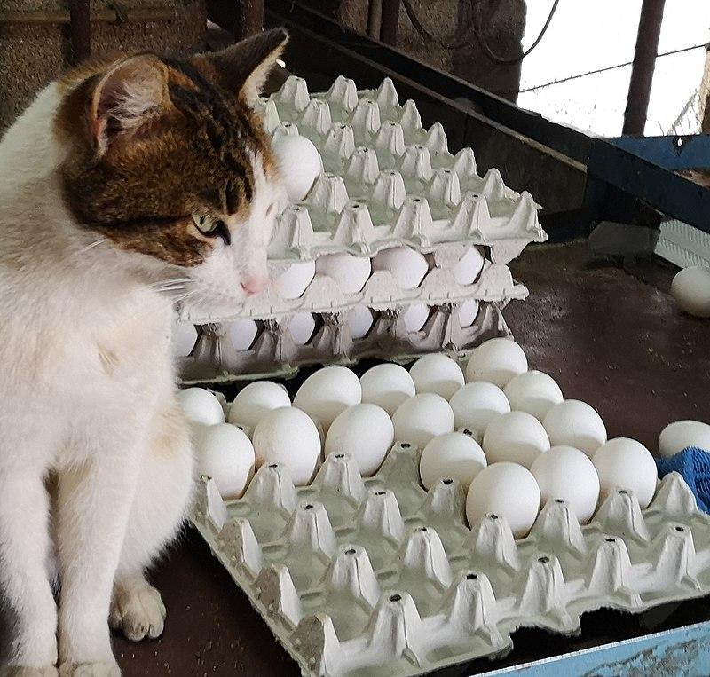 מיון ביצים