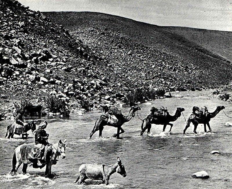 גמלים בנהר הירדן