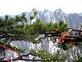 Pinus tabuliformis Hua Shan2.jpg