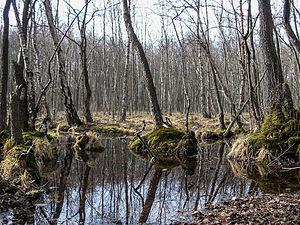 Schorfheide-Chorin Biosphere Reserve - Carr landscape in the Schorfheide reserve.