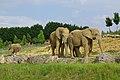 Plaine des éléphants Beauval.jpg