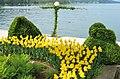 Poertschach Johannes-Brahms-Promenade Buchsbaum und Tulpen 10052013 735.jpg