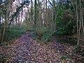Pond, High Wood - geograph.org.uk - 624923.jpg