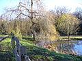 Pond at Frillinghurst - geograph.org.uk - 291783.jpg
