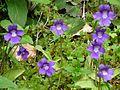 Pont dEspagne violets (4742226268).jpg