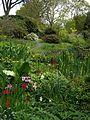 Pool meadow - Flickr - peganum.jpg