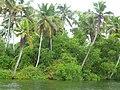 Poovar backwaters, Kerala, India.jpg