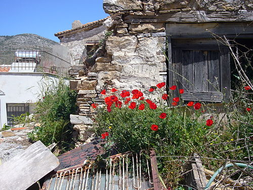 Photograph of red poppies and derelict house